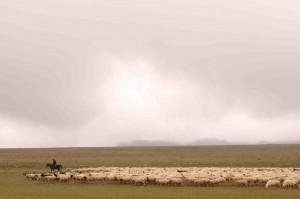 Des Steppes du Petit Caucase